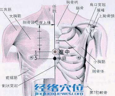 膻中穴的位置解剖分析图