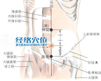 关元穴的位置解剖分析图