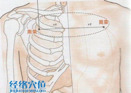 周荣穴的位置图