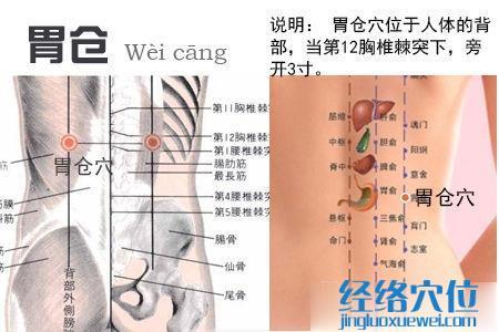 胃仓穴位位置图