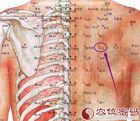 膏肓穴的位置图及解剖结构