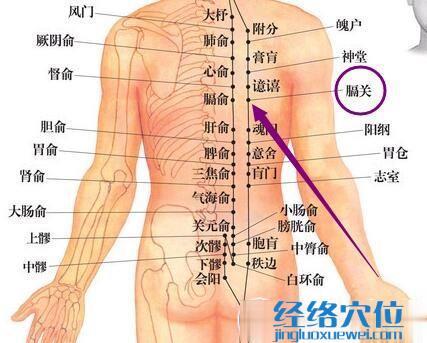 足太阳膀胱经膈关穴
