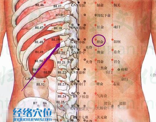 胆俞穴位位置图