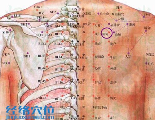 附分穴的位置解剖图