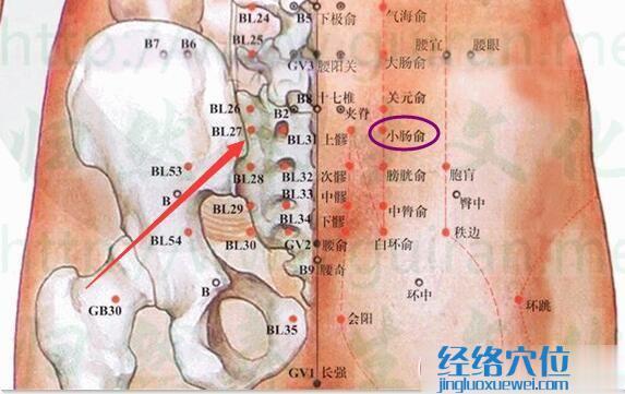 小肠俞穴的准确位置图