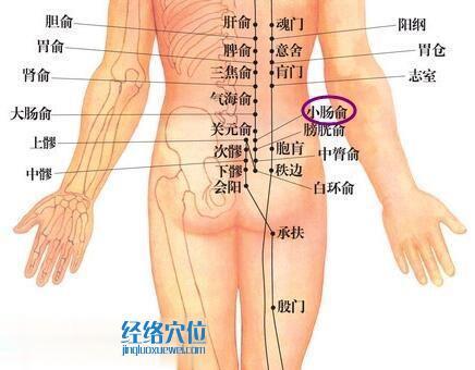 小肠俞穴位位置图