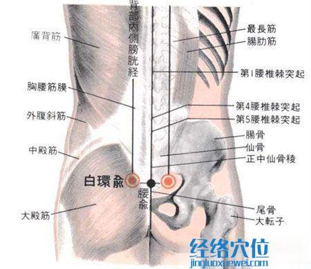 白环俞穴的位置及解剖图