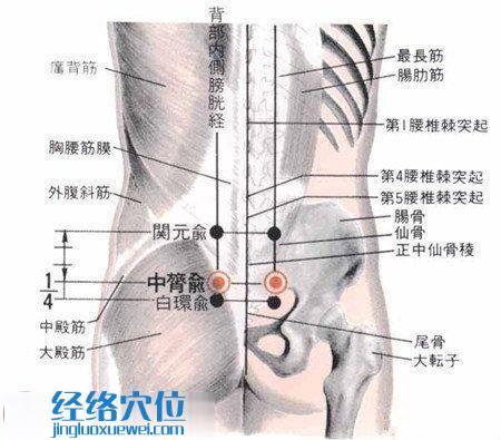 中膂俞穴的位置及解剖结构图