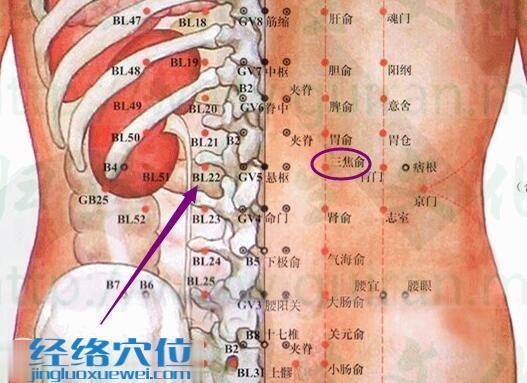 三焦俞穴的解剖分析图