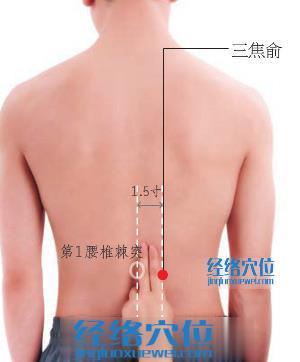 三焦俞穴位位置图