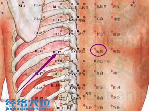 膈俞穴的解剖分析图