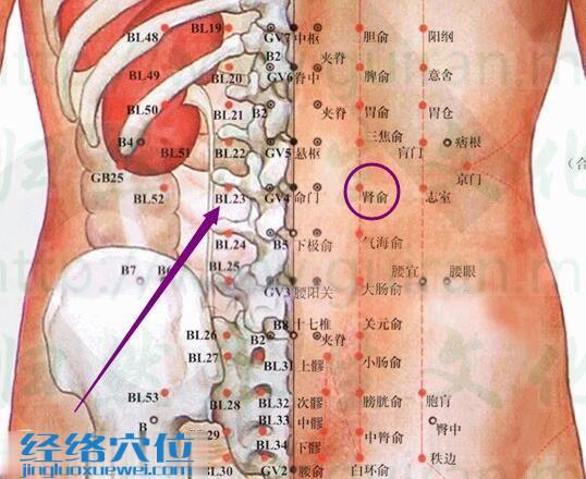 肾俞穴的位置及解剖分析图(高清)