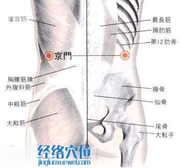 京门穴的位置解剖分析图