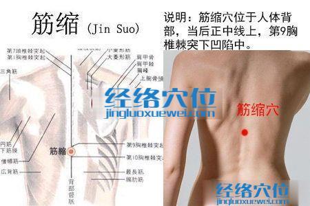 筋缩穴的位置解剖分析图