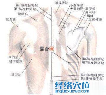 灵台穴的位置解剖分析图