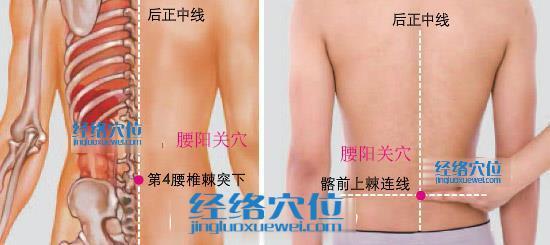 腰阳关穴位位置图