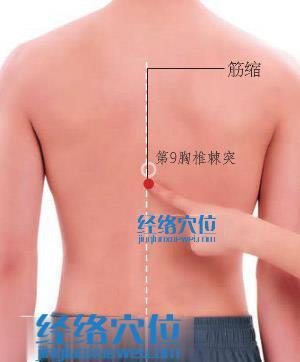 筋缩穴位位置图