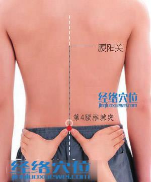 腰阳关穴的准确位置图