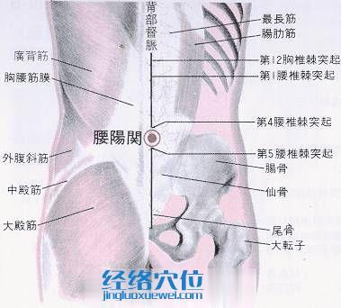 腰阳关穴的位置解剖分析图