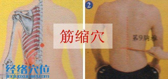 筋缩穴的位置图