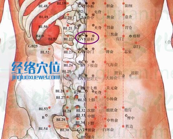悬枢穴的准确位置图