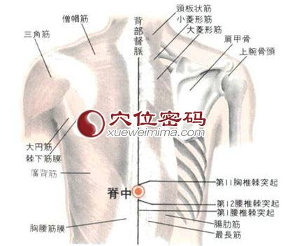 脊中穴的位置解剖分析图