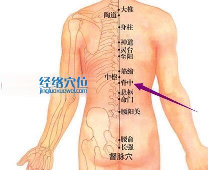 脊中穴的位置图