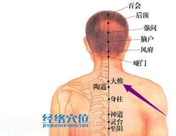 大椎穴位图