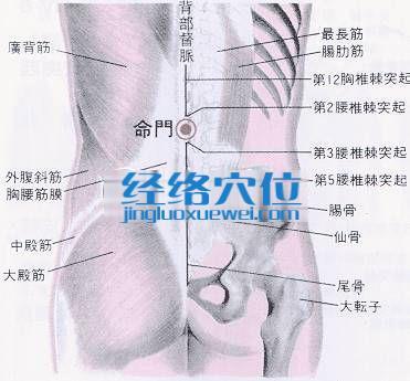 命门穴的位置解剖分析图