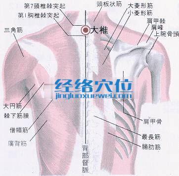 大椎穴的位置解剖分析图