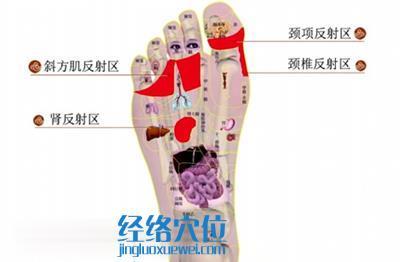 足部里疗法: