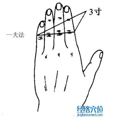3寸比量方法(一夫法示范图)