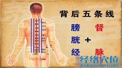 膀胱经和督脉